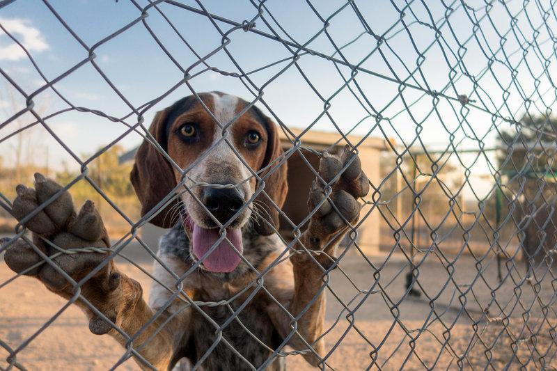 dogsrangers.jpg